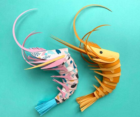 Make a paper prawn with Lisa Lloyd